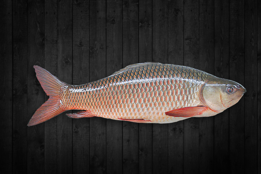 Fresh water fish products blue fin frozen foods pvt ltd for Blue fin fish